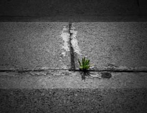 plant_stone